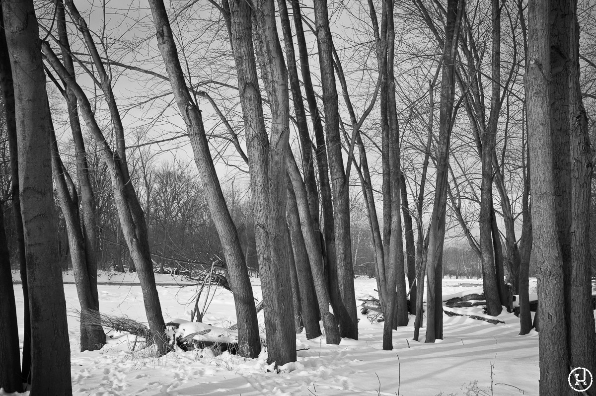 A winter morning at Sidecut Metropark on February 13, 2010